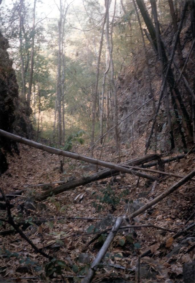 Konyu Cutting 1983